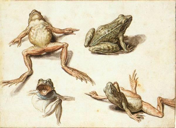 II Four Studies Of Frogs